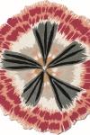 tappeto-moderno-missoni-botanica_03